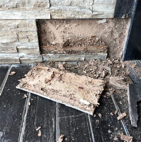 vice cache maison humidite les fourmis charpenti 232 res un vice cach 233 dans votre maison a 224 z extermination