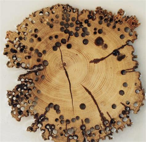 eliminare tarli dai mobili eliminare i tarli dal legno affordable i tarli non