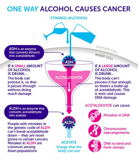 alcohol  cancer cancer research uk