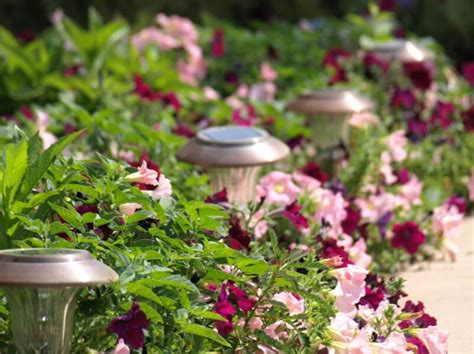 flower bed lights how to choose the right solar lights modernize