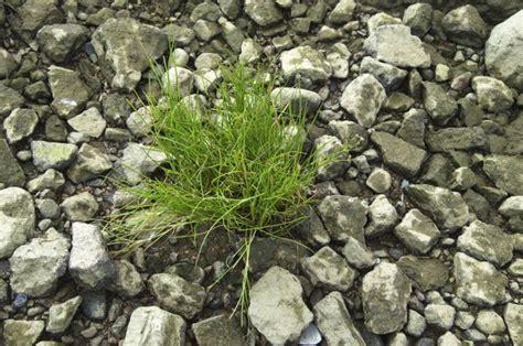 grow grass  gravel hunker