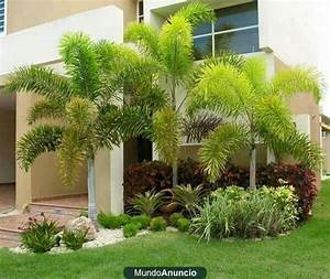 17 meilleures idees a propos de chamaerops excelsa sur With idee deco de jardin exterieur 4 plantes exotiques pour jardin et terrasse en vente chez