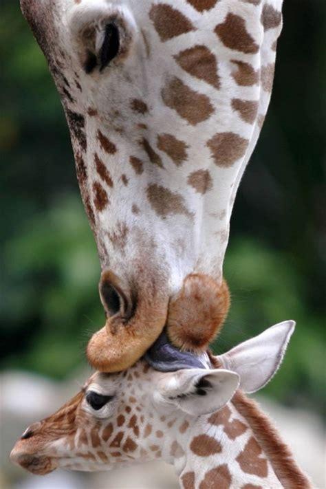 lustige tiere  stimmungsvolle fotos fuer echte