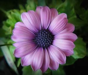 Bride Purple Flower Picture Jpg Hi
