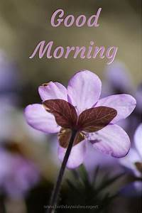 60 Good Morning... Beautiful Morning Wish Quotes