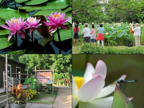 kenilworth aquatic gardens kenilworth aquatic gardens dc gardens