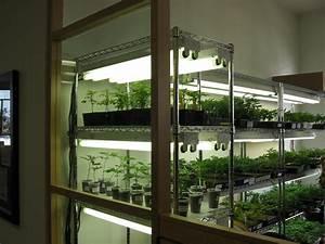 Wann Setzt Man Sträucher Um : wie topft man eine cannabispflanze um ~ Articles-book.com Haus und Dekorationen