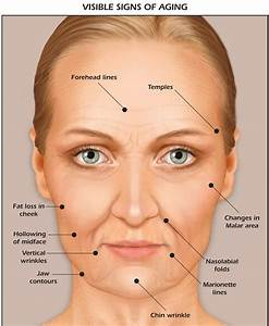Anatomy Of Facial Aging