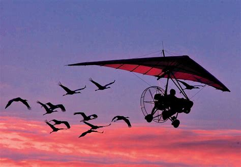 feds to end ultralight aircraft led whooping crane