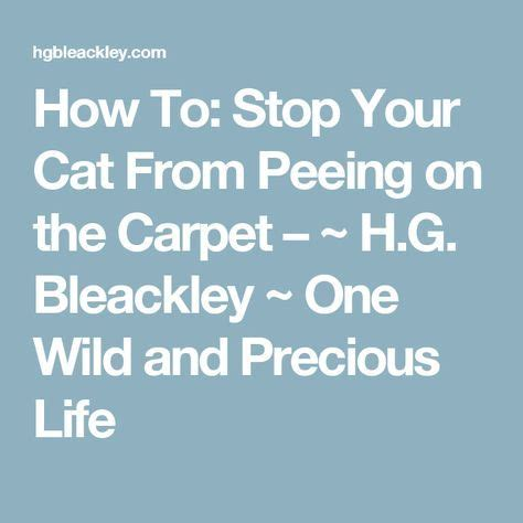 how to get your cat to stop how to stop your cat from on the carpet h g