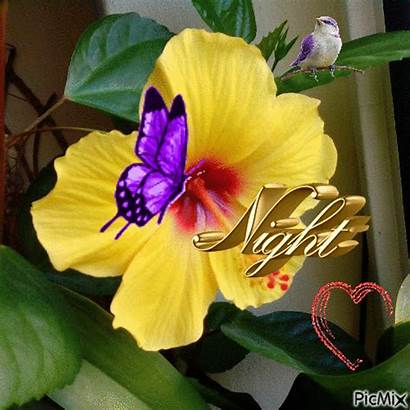 Night Flowers Goodnight Animated Gifs Quotes Dreams