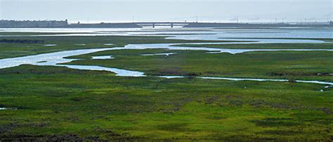 habitats seal beach  fish  wildlife service