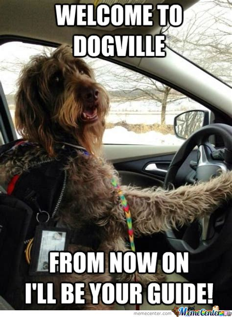 Dog In Car Meme - dog driving memes best collection of funny dog driving pictures