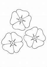 Template Poppy Coloring Flower Printable Pages Colouring Templates Poppies Sheets Pdf Remembrance Anzac Flowers Activities Colour Craft Clipart Drawing Category sketch template