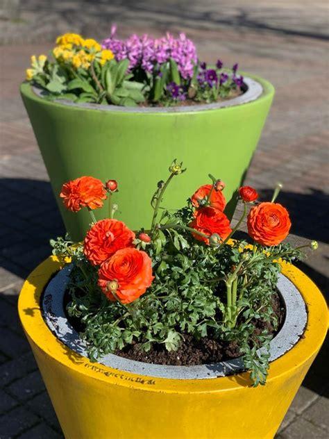 Pavasara_ziedi