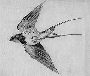 Sketch Swallow 700 Jpg 700 590, Swallows Drawing, Bird ...