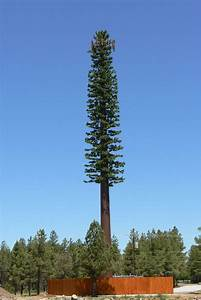 Human Trainer Exercise Chart This Is Not Just An Ordinary Tree But An At T Cell Tower