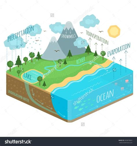 Diagram Of A Water by Water Cycle Diagram Tree Soil Precipitation