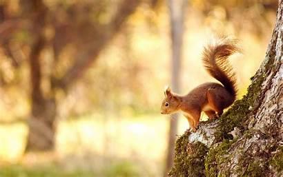 Animals Animal Wild Wallpapers Squirrel Desktop Widescreen