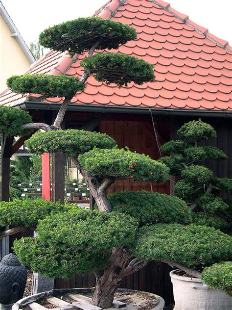 Garten Bonsai Selber Machen Garten Bonsai Erfolgreiche