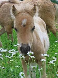 Horse Pictures Images Wallpapers Photos 2013: Cute Baby ...
