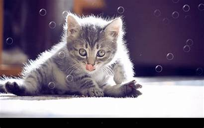 Cat Funny Wallpapers Cats Google Apps Desktop