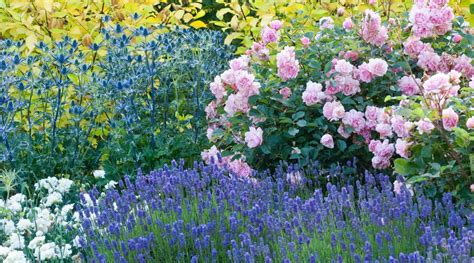 The Gardens  Bressingham Gardens