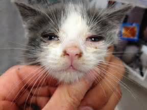 My cat is about 10 months old and one eye seems to glow even Cats, Infections from