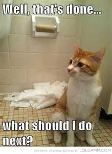 toilet cat 20 cats play with toilet paper make you laugh