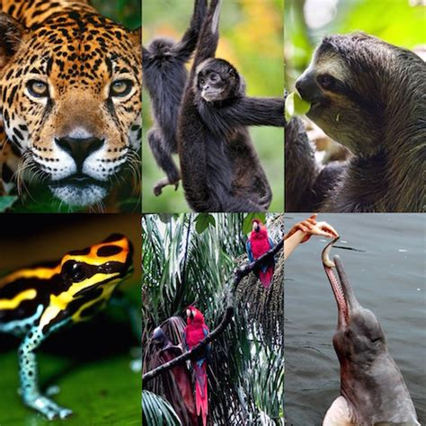 endangered amazon wildlife rainforest cruises