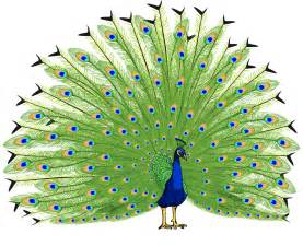 Transparent Cartoon Peacock