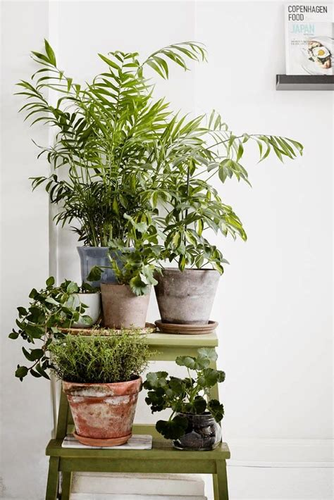 cheap indoor plants home decorating ideas for cheap house plants succulents