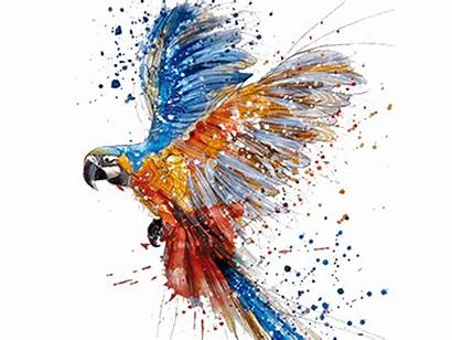 Watercolor Parrot Transparent Background Drawing Clipart Painting
