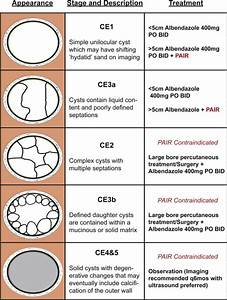 Appearance  Classification Of Cyst Stage  Cyst Stage