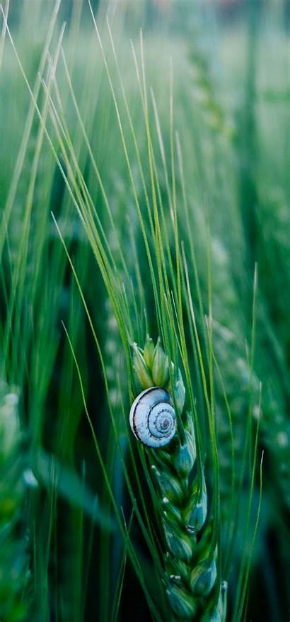Wallpapers Macro Shell Snail Phone Y15 Huawei