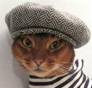 hats for cats feline fashion warehouse designer creates cool cat clothing range for fashion
