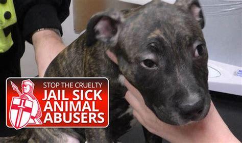 animal cruelty latest news updates  cases expresscouk