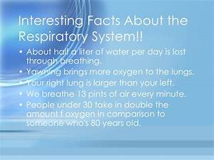 respiratory system small essay oxford university online course in creative writing respiratory system small essay