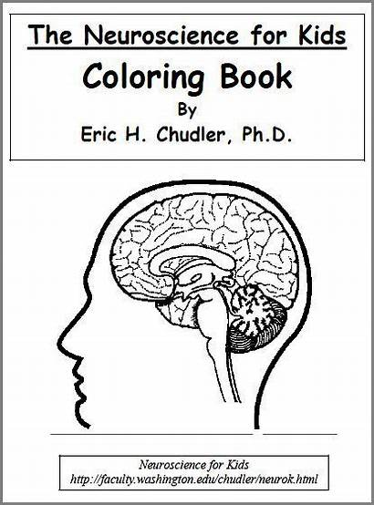 Brain Science Worksheets Coloring Human Pages Anatomy