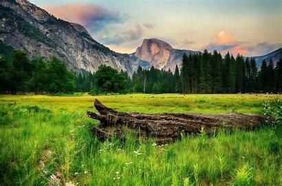 Scenery Grass Yosemite Nature Usa Forests Wallup
