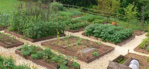 plan  vegetable garden  step  step guide