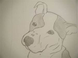 Pitbull+drawings+in+pencil | embroidery | Pinterest ...