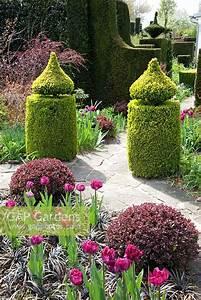 Berberis Thunbergii Atropurpurea Nana : gap gardens formal garden with tulipa 39 blue diamond 39 buxus berberis thunbergii 39 atropurpurea ~ Pilothousefishingboats.com Haus und Dekorationen