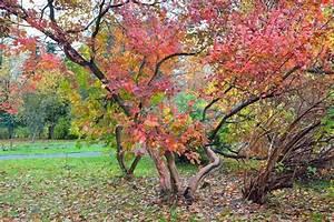 Baum Mit Roten Blättern : gro er baum mit roten bl ttern in stockfoto colourbox ~ Eleganceandgraceweddings.com Haus und Dekorationen