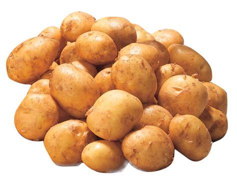 cuisiner les pommes de terre de noirmoutier la bonnotte de noirmoutier la noirmoutier