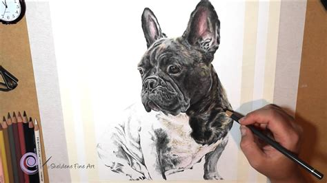 realistic colored pencil drawing   french bulldog youtube
