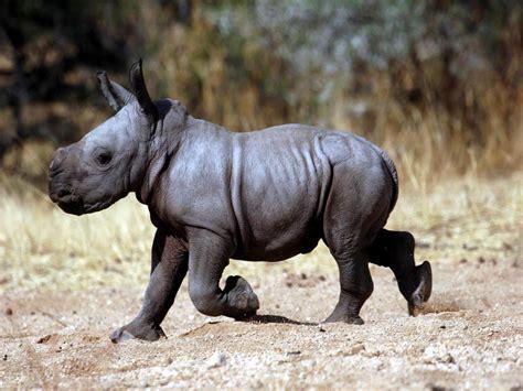 recettes de cuisine simples le bébé rhinocéros momes