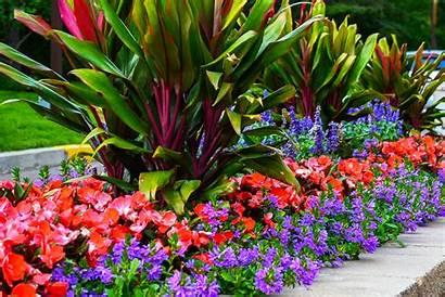Tropical Plants Florida Trees Miami Miamitropicalplants Inc