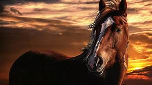 Horse Sunset | Download HD Wallpapers