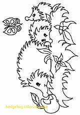 Hedgehog Coloring Getdrawings sketch template